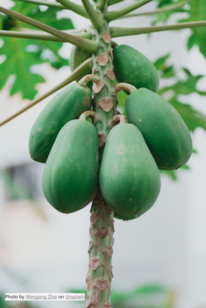 Papaya - the fruit of the angels